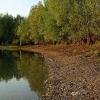 Утро на озере :: Alexander Andronik