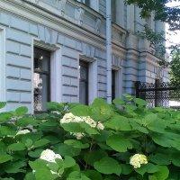 Цветы в саду Сан-Галли (Санкт-Петербург). :: Светлана Калмыкова