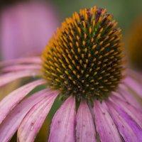 Цветок :: Мария Шибко