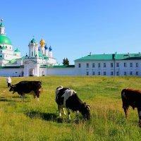 Ростовский Спасо-Яковлевский Димитриев монастырь. :: Николай Кондаков