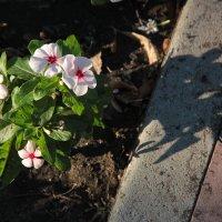 Августовские цветы :: Александр Алексеев