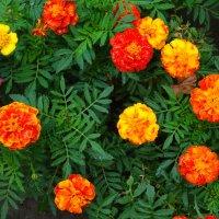 Цветочный хоровод... :: Тамара (st.tamara)
