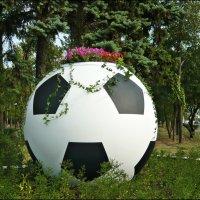 Футбольный мяч-вазон! :: Надежда