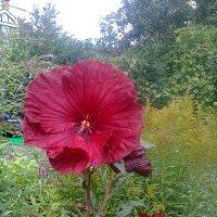 Цветок :: Варвара