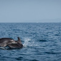 Дельфины :: Ирина Холодная
