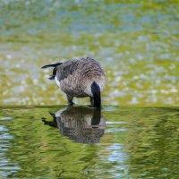 Такая вот птичка с хоботом... :: Юрий Поляков
