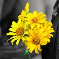 Цветы :: Евгения Ламтюгова