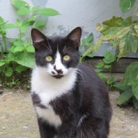 Кошки и коты... :: Владимир Павлов