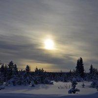Однажды,в студёную зимнюю пору... :: владимир полежаев