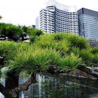 """Токио """"Palace hotel"""" :: Swetlana V"""