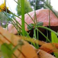 Под крышей гриба моего :: Валерий Розенталь