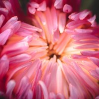 Цветок :: Артем