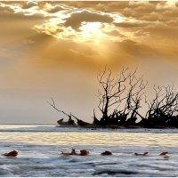 Букет Мертвого моря :: irina Schwarzer