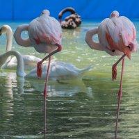 Фламинго :: Василий Дудин