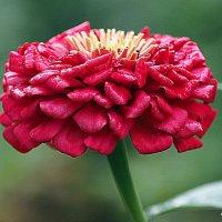 красота простого цветка :: Олег Лукьянов