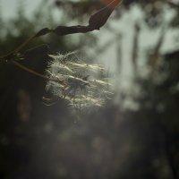 Мелкий пушистик :: Albina