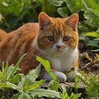 плюшевый кот) :: Ольга Логинова