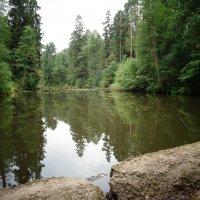 Старый пруд. (Лен.область, п. Бернгардовка). :: Светлана Калмыкова