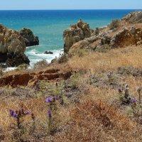 Португалия. Скалы над океаном. :: Лариса (Phinikia) Двойникова
