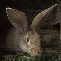 кролики-это не только ценный мех :: Александр Солуянов