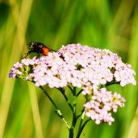 Цветок и муха :: Сергей Царёв