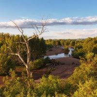 Пейзаж с сухим деревом :: Александр Кислицын