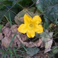 цветок :: Giant Tao /
