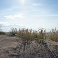 Настоящие балтийские дюны – очень живописное место :: Елена Павлова (Смолова)