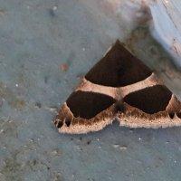Ночная бабочка (сидела в подъезде на ступеньке) :: Светлана