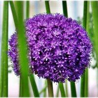 Цветы Москвы :: Veselina *