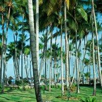 Лето, Пальмы, Море... :: Alexander Dementev