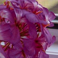 цветок :: Юлия Денискина