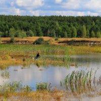Зарастают карасиные озёра... :: Лесо-Вед (Баранов)