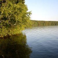 Берег озера Еловое.... :: Дмитрий Петренко