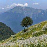 Альпийские луга в Абхазии :: олег