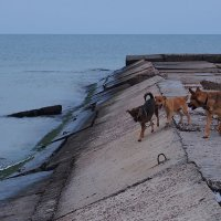 The Box - пляж эмоций. Морские волки... :) :: Александр Резуненко