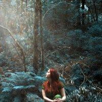 В сердце леса :: Сергей Кривошеев