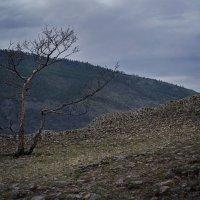 на семи ветрах... :: Алиса Колмагорова