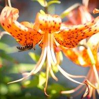 Пчела :: Мария Серогодская