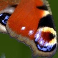 Крыло бабочки :: ID@ Cyber.net