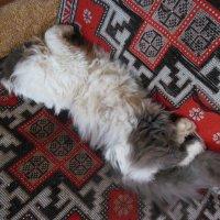 Как сладко спится! :: Татьяна