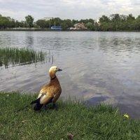 Вроде как лето, а никто не купается... :: Tatiana Poliakova