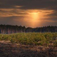 Лесной закат ... :: Roma Chitinskiy