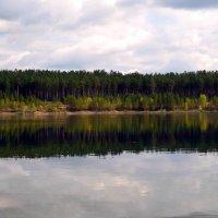 Лесное озеро :: Вера Андреева