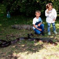 изучаем змею :: elena manas