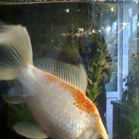 Одна в аквариуме :: Андрей