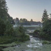 Утро на заросшей речке :: Сергей Цветков