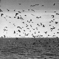 1971-й. Атлантический океан. Банка Джорджес :: Иволий Щёголев