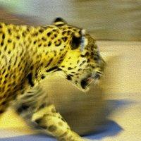 Портрет леопарда ) :: Алексей Медведев