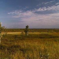 Край болот и озер :: Оксана Галлямова
